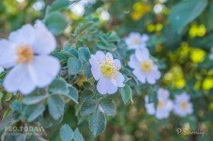Цветы Феодосии #12142