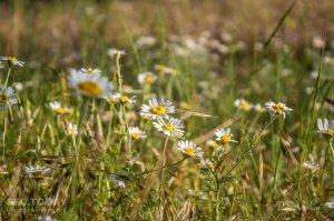 Цветы Феодосии #12143