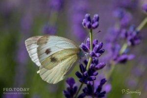 Цветы Феодосии #12144