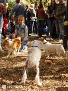 Выставка собак КРАСА КАФЫ в Феодосии #5153