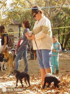 Выставка собак КРАСА КАФЫ в Феодосии #5171