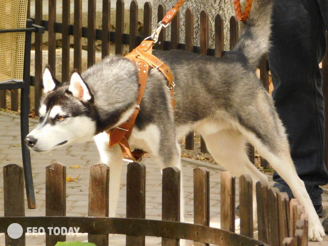 Выставка собак КРАСА КАФЫ в Феодосии #4999
