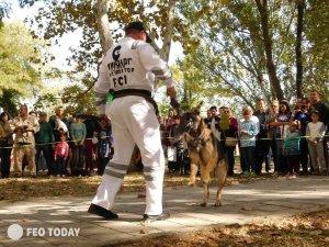 Выставка собак КРАСА КАФЫ в Феодосии #5173