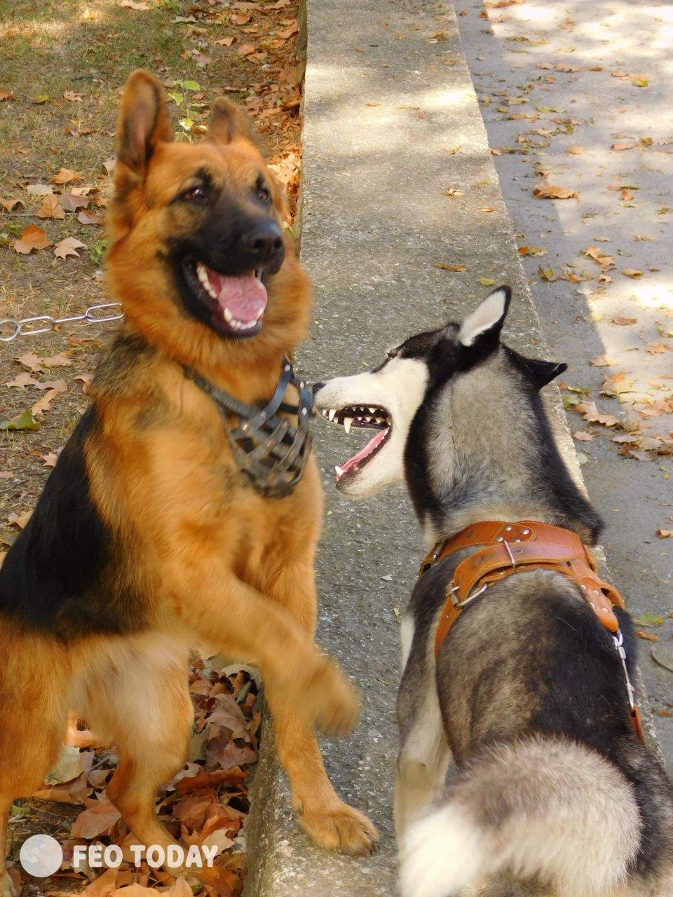 Выставка собак КРАСА КАФЫ в Феодосии #5012