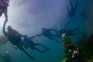 Фото новогодней елки на дне моря в Феодосии #6381