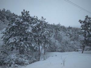 Заснеженная лысая гора #14711