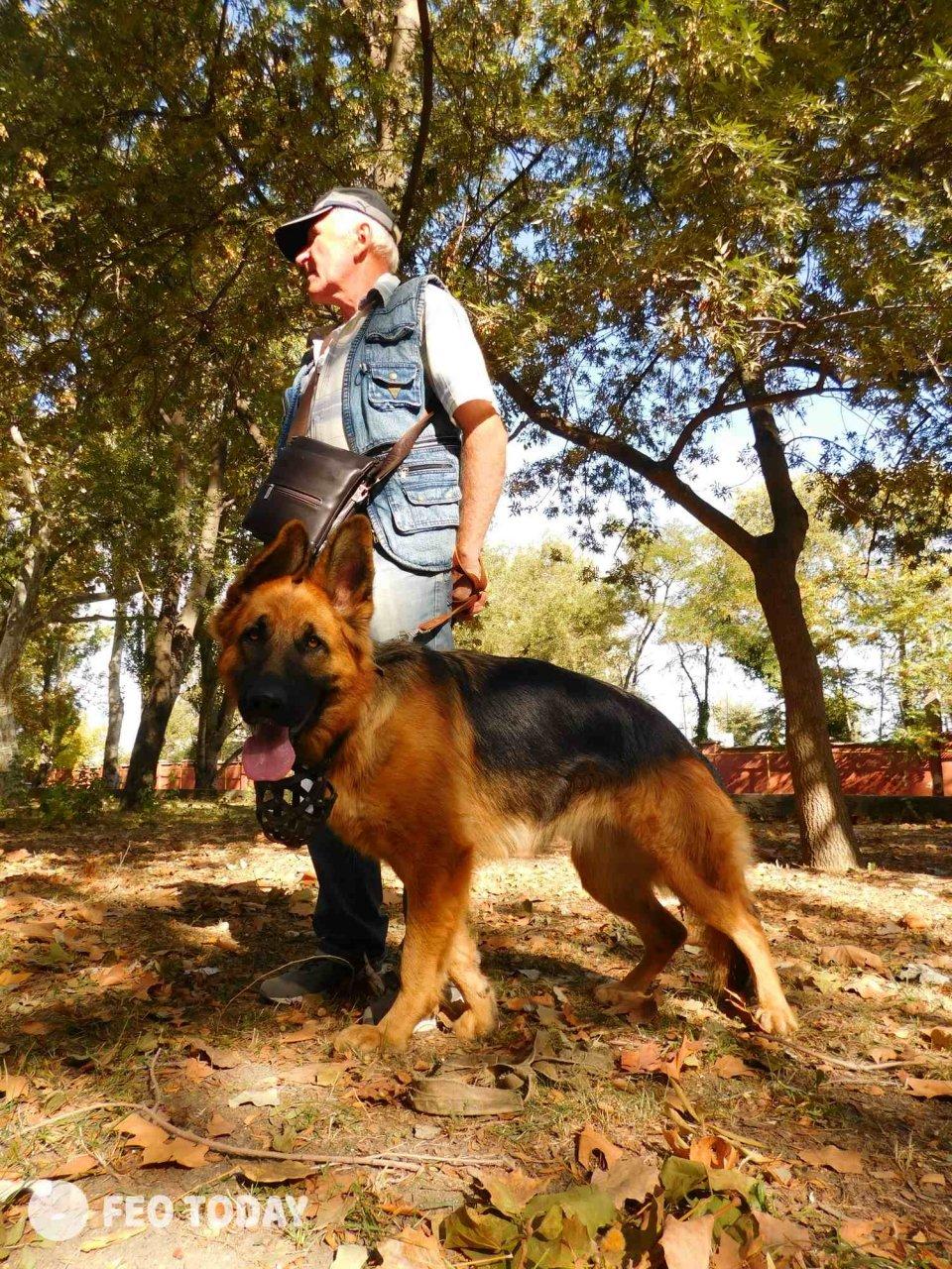 Выставка собак КРАСА КАФЫ в Феодосии #5020