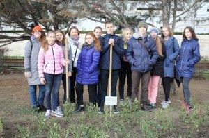 Фото высадки роз на набережной Феодосии #6211