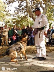 Выставка собак КРАСА КАФЫ в Феодосии #5161