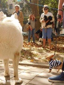 Выставка собак КРАСА КАФЫ в Феодосии #5167