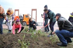 Фото высадки роз на набережной Феодосии #6200