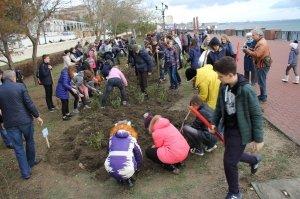 Фото высадки роз на набережной Феодосии #6202