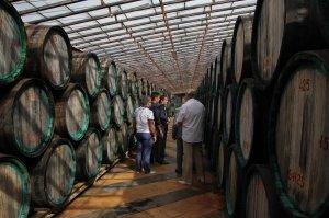 Фото экскурсии на коктебельский винный завод #241