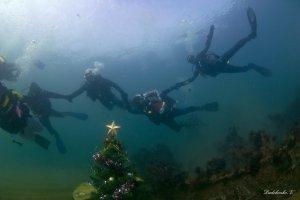 Фото новогодней елки на дне моря в Феодосии #6383