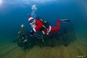 Фото новогодней елки на дне моря в Феодосии #6385