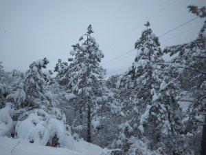 Заснеженная лысая гора #14715
