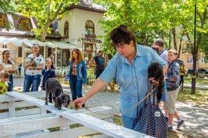Плановая выставка собак, май 2018 #11362