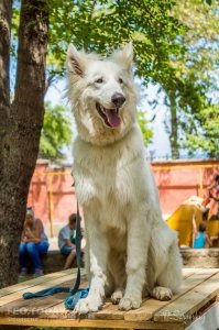 Плановая выставка собак, май 2018 #11366