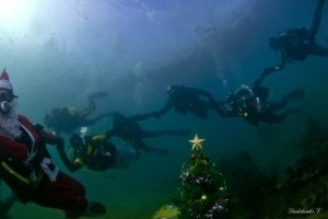 Фото новогодней елки на дне моря в Феодосии #6378