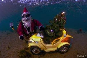 Фото новогодней елки на дне моря в Феодосии #6386