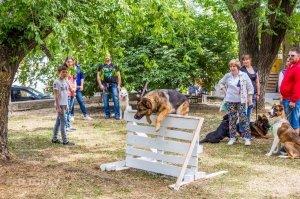 Плановая выставка собак, май 2018 #11376