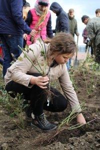 Фото высадки роз на набережной Феодосии #6209