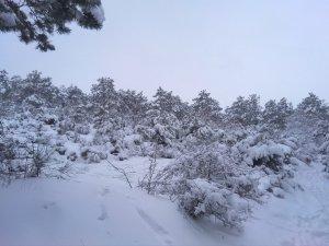 Заснеженная лысая гора #14705