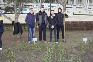 Фото высадки роз на набережной Феодосии #6206
