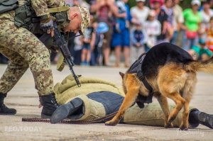 День пограничника в Феодосии #11683