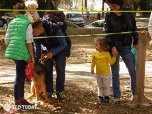 Выставка собак КРАСА КАФЫ в Феодосии #5155