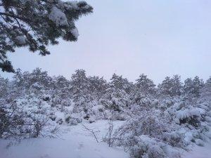 Заснеженная лысая гора #14713