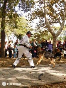 Выставка собак КРАСА КАФЫ в Феодосии #5158
