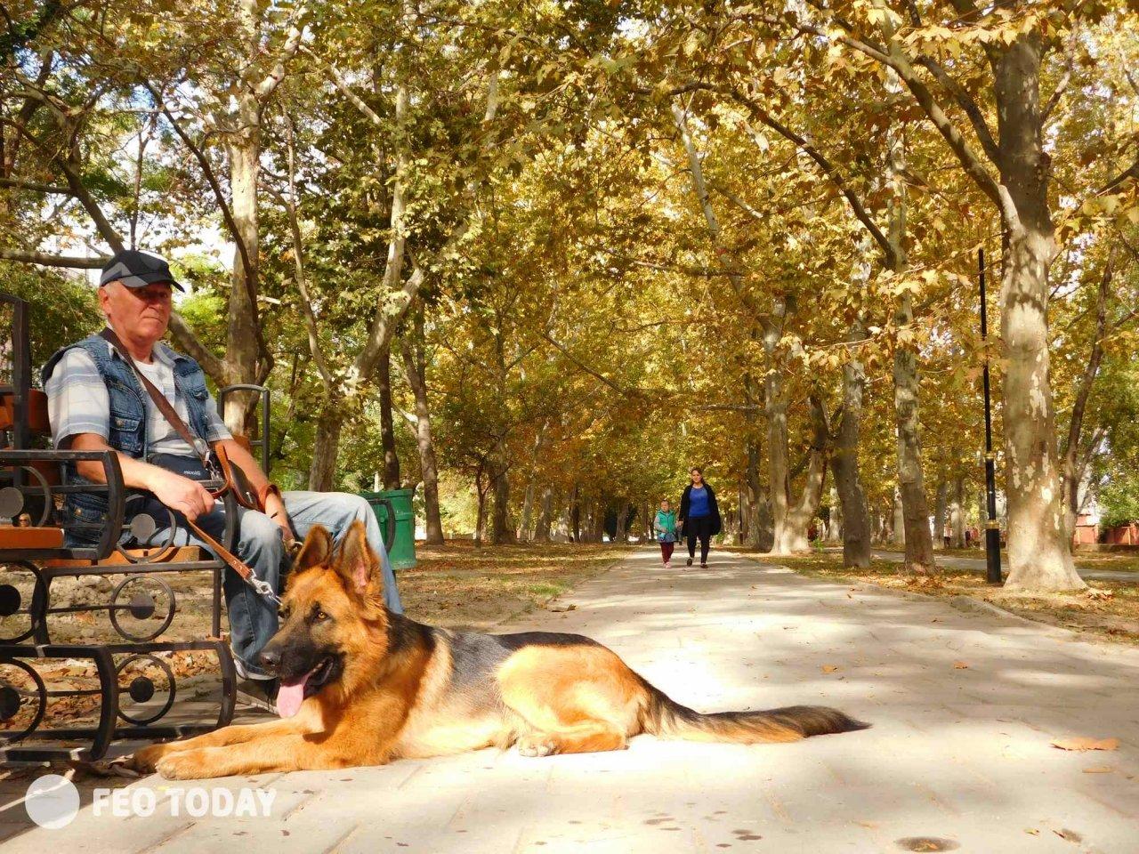 Выставка собак КРАСА КАФЫ в Феодосии #5000