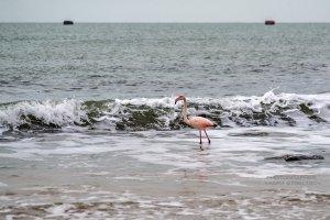 Фото фламинго в Феодосии #7412