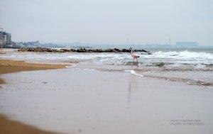 Фото фламинго в Феодосии #7411