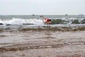 Фото фламинго в Феодосии #7407