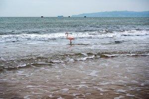 Фото фламинго в Феодосии #7414