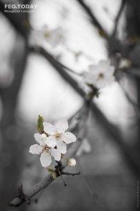 Фото Феодосии #7565